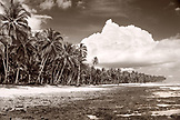 INDONESIA, Mentawai Islands, palm trees with island against cloudy sky (B&W)