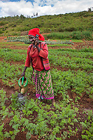 Africa, Rwanda, Kayonza. Women for Women project. Women working in agricultural fields, Njagama Demonstration Farm in Kyonza. Miragire Godese, WFW graduate (red), watering and talking on her cell phone.