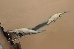 Two Crocodile loll beneath a bridge over a muddy river in Costa Rica. photo by Trevor Collens