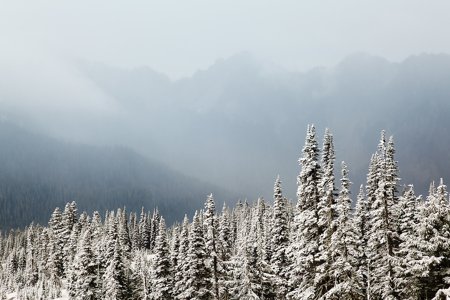 Snow covered sub-alpine forest, Paradise, Mount Rainier National Park, Washington, USA