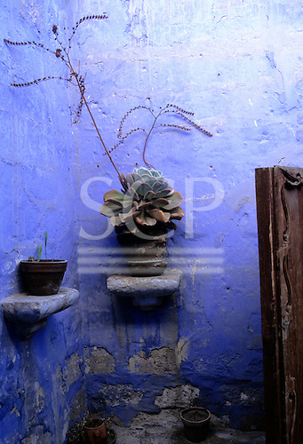 Arequipa, Peru. The Santa Catalina Monastery; plants in pots against a faded cobalt blue wall.