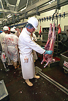 Government appointed meat hygiene service meat inspector at work in an abattoir, he is checking the cavity of the carcase. This image may only be used to portray the subject in a positive manner..©shoutpictures.com..john@shoutpictures.com