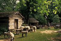 Abraham Lincoln, IN, Indiana, Sheep on the Living Historical Farm at Lincoln Boyhood National Memorial in Indiana.