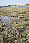 Marshland and tidal river, Butley Creek, Butley, Suffolk, England