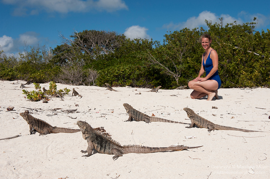 Gardens of the Queen, Cuba; Cuban Iguana's resting on a sandy beach during a sunny afternoon are joined by a woman in a blue swimsuit