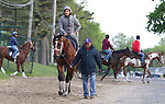 Maximum Security with exercise rider Edelberto Rivas in the saddle and guided by Assistant Trainer Jose Hernandez, makes his way off the track after galloping a mile at Monmouth Park in Oceanport, New Jersey on Thursday morning May 16, 2019. Maximum Security returned to the track after a week of easy walking.  Photo By Bill Denver/EQUI-PHOTO