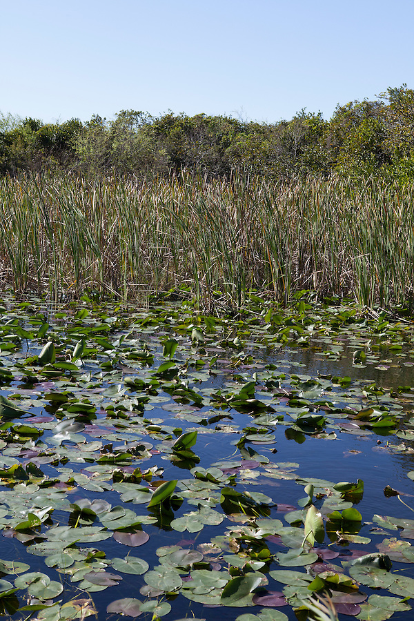 Shark Valley area, Everglades National Park, Florida, USA
