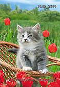 Marek, ANIMALS, REALISTISCHE TIERE, ANIMALES REALISTICOS, cats, photos+++++,PLMP2598,#a#