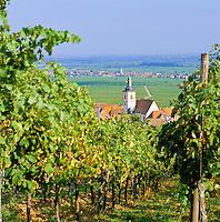 Germany, Rhineland-Palatinate, Weyher: Wine-Village along German Wine Route (autumn) | Deutschland, Rheinland-Pfalz, Suedliche Weinstrasse, Weyher in der Pfalz: Weinort an der Deutschen Weinstrasse