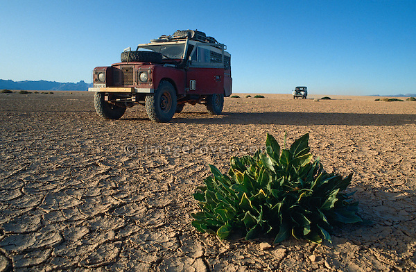 Africa, Algeria, Sahara Desert, nr. Amguid. Series 3 Land Rover on a typical dry dirt track. --- No releases available, but release may not be required. --- Property release available. Automotive trademarks are the property of the trademark holder, authorization may be needed for some uses.