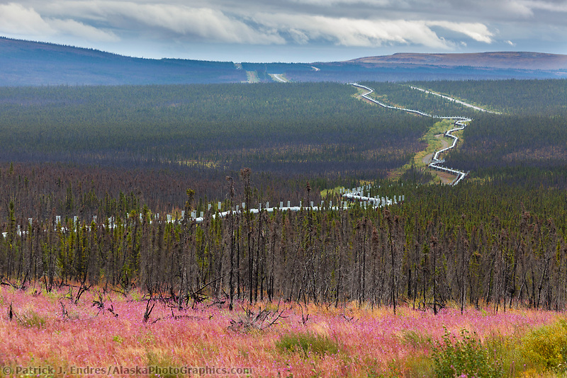Bloomed out fireweed along the James Dalton Highway, commonly called the Haul Road, Trans Alaska oil pipeline, Alaska.