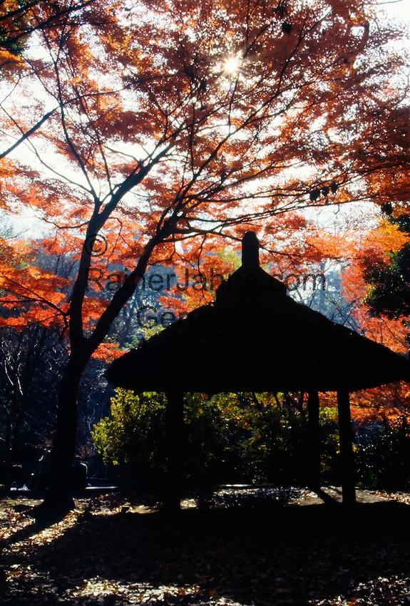 Japan, Tokyo: autumn colours, maple, pavilion, garden