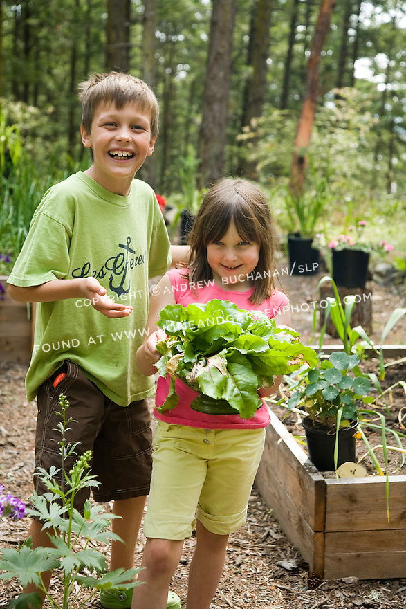 a model-released image of smiling nine year old boy and six year old girl standing in a summer vegetable garden of raised beds and proudly showing off a large bunch of freshly-picked  greens in a green colander