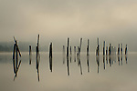 Foggy setting on Pend Oreille with pilings.