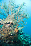 Bonaire, Netherlands Antilles; sea rods, corals and sponges decorate a coral formation on the reef, silhouette against a blue water background , Copyright © Matthew Meier, matthewmeierphoto.com All Rights Reserved