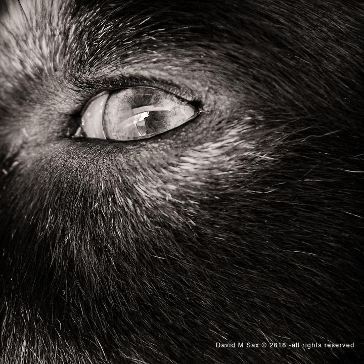 6.23.17 - Eye Have It...