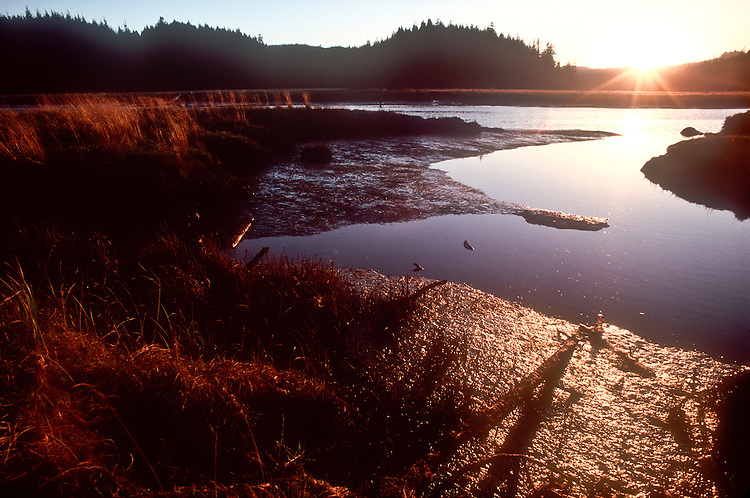 Bone River, Willapa Bay, Southwest Washington timberlands,  Washington State, USA, Nature Conservancy, nature preserve,