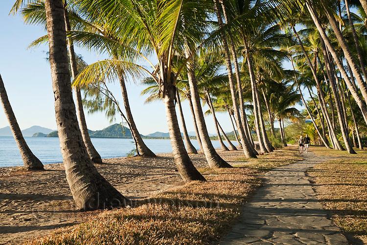 Coconut palms along beachfront at Palm Cove, Cairns, Queensland, Australia