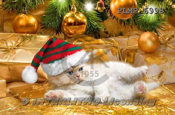 Marek, CHRISTMAS ANIMALS, WEIHNACHTEN TIERE, NAVIDAD ANIMALES, photos+++++,PLMP6998,#XA# cat  santas cap,