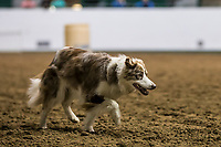 2019 Mn Stock Dog Trials<br /> <br /> Libby