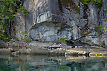 British Columbia, Canada:<br /> Detail of faint petroglyphs on a rock wall at waters edge, Homfray Channel, Desolation Sound