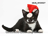 Kim, CHRISTMAS ANIMALS, WEIHNACHTEN TIERE, NAVIDAD ANIMALES, photos+++++,GBJBWP38827,#xa#