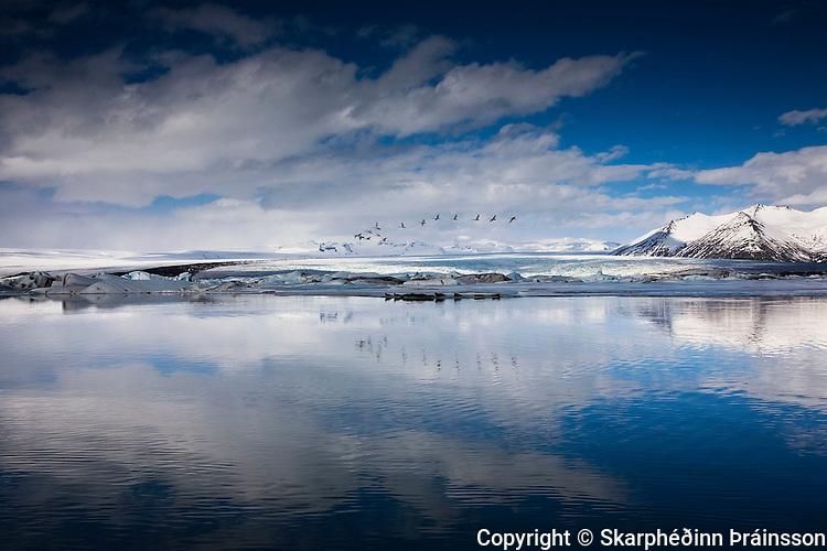Wildlife at the Glacier Lagoon /Jökulsárlón, on the south cost of Iceland