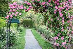 Zephirine Drouhin roses in the James P. Kelleher Rose Garden, Boston, Massachusetts, USA