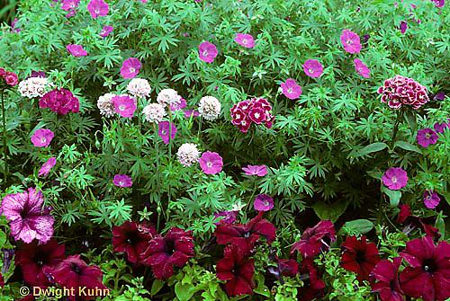 HS47-001c  Flower Garden