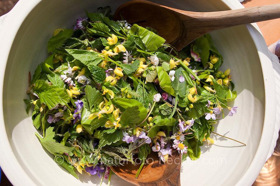 Kräuter - bzw. Wildgemüse - Salat, Kräutersalat im Frühjahr, als Zutaten Gänseblümchen, Löwenzahn, Taubnessel, Gundermann u.a.m.
