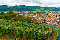 Vineyards above the medieval town of Gengenbach, Baden-Württemberg, Germany