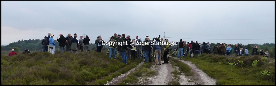 BNPS.co.uk (01202 558833)<br /> Pic: KevinHannam/BNPS<br /> <br /> ****Please use full byline****<br /> <br /> Crowd on top of Morden Bog.<br /> <br /> Hundreds of bird watchers have flocked to a nature reserve in Dorset after a rare short-toed eagle arrived there on Saturday.<br /> <br /> About 700 people travelled to Morden Bog, near Wareham, over the weekend.<br /> <br /> It is thought to be first sighting of the species on the British mainland.<br /> <br /> The birds are common in central and southern Europe and have a wingspan of up to 6ft.<br /> <br /> Short-toed eagles migrate from Africa in the spring and can live up to 30 years.