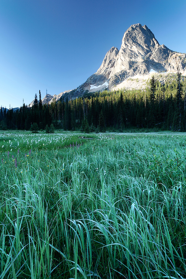 Meadow below Liberty Bell Mountain, Washington Pass, Hwy 20, Wenatchee National Forest, North Cascades, Washington