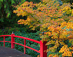 Kubota Garden, Seattle, WA<br /> Heart Bridge  with fall colored branches of a Japanese maple