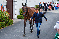 FRA-Nicolas Touzaint presents Absolut Gold during the SAP Cup CICO4*-S Nations' Cup Eventing 1st Horse Inspection. 2019 GER-CHIO Aachen Weltfest des Pferdesports. Thursday 18 July. Copyright Photo: Libby Law Photography