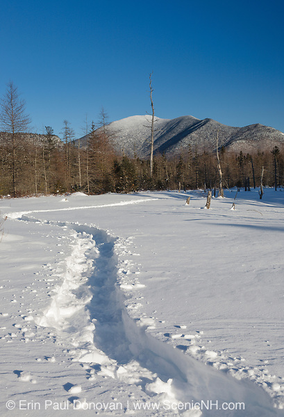 Mount Carrigain covered in snow during the winter months from the Meadow Brook drainage in Livermore, New Hampshire. This area was logged during the Sawyer River Railroad era (1877-1928). The Sawyer River Trail travels near this brook.