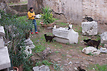 at 4 pm it is feeding and stroking time in the cat forum in rome italy