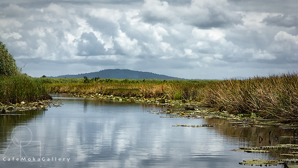 Nariva swamp wetlands