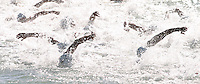 25 OCT 2003 - VOUGLIAMENI, ATHENS, GREECE - Elite Mens swim during the ITU World Cup round. (PHOTO (C) NIGEL FARROW)