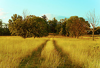 A manmade trail into a midwestern field of trees