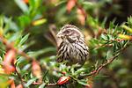 Unknown bird captured in Rwanda | Ukjent fugl fotografert i Rwanda.