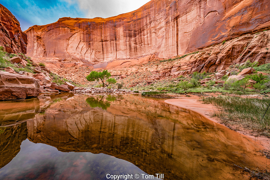 Reflection inside Pool Canyon, Glen Canyon National Recreation ARea, Utah  Lake Powelll