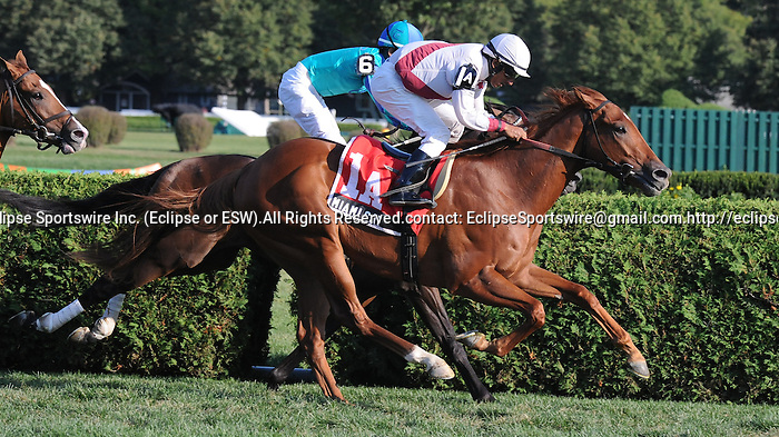 Miami Cat (no. 1A), ridden by Rajiv Maragh and trained by Philip Gleaves, wins the Equalize Stakes for three year olds on August 30, 2012 at Saratoga Race Track in Saratoga Springs, New York.  (Bob Mayberger/Eclipse Sportswire)