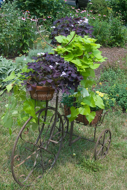 how to get rid of oxalis in flower beds