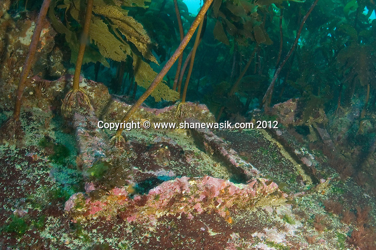 Plating from the MFV San Benito on Tuhua Reef