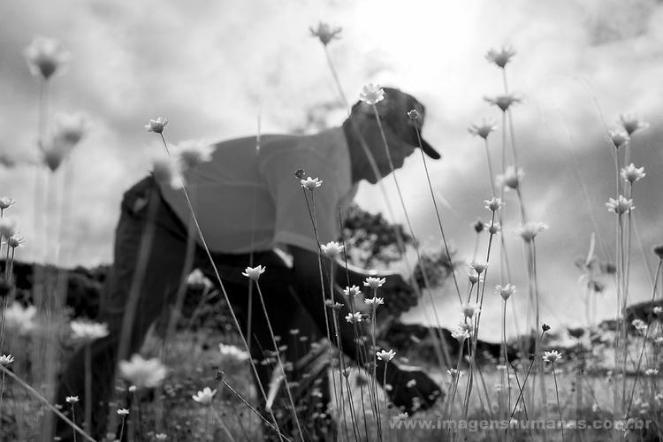 Popula&ccedil;&otilde;es Tradicionais de apanhadores de flores Sempre Vivas situada entre a Serra do Espinha&ccedil;o e a Serra do Cip&oacute;<br /> Popula&ccedil;&atilde;o de Raiz no munic&iacute;pio de Presidente Kubitschec vive da colheita de flores sempre viva em especial do capim dourado e do artesanato do capim dourado. S&atilde;o tamb&eacute;m agricultores e quilombolas reivindicando o reconhecimento do territ&oacute;rio. Est&atilde;o pressionados pela presen&ccedil;a de grilagem de eucaliptos que chegam as cercanias da comunidade. comunidade quilombola da colhedores de flores capim dourado. Artez&atilde;os da comunidade de Raiz na grande regi&atilde;o de Diamantina, Minas Gerais.