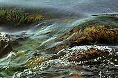 Xingu River, Brazil. Water with water weeds.