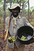 Kopa, Zambia. Man wearing a floppy hat holding Mopani caterpillers (Imbrasia belina), a food delicacy.