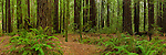 Armstrong Redwoods State Natural Reserve, California