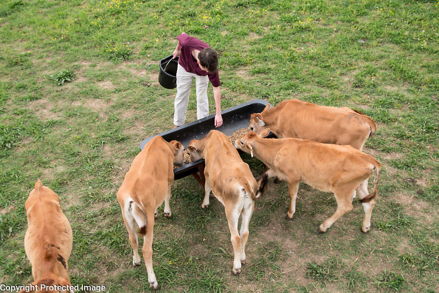 Students with Calves Students with Calves